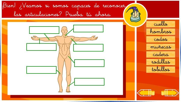 Las articulaciones del cuerpo humano | Recurso educativo 35585 ...