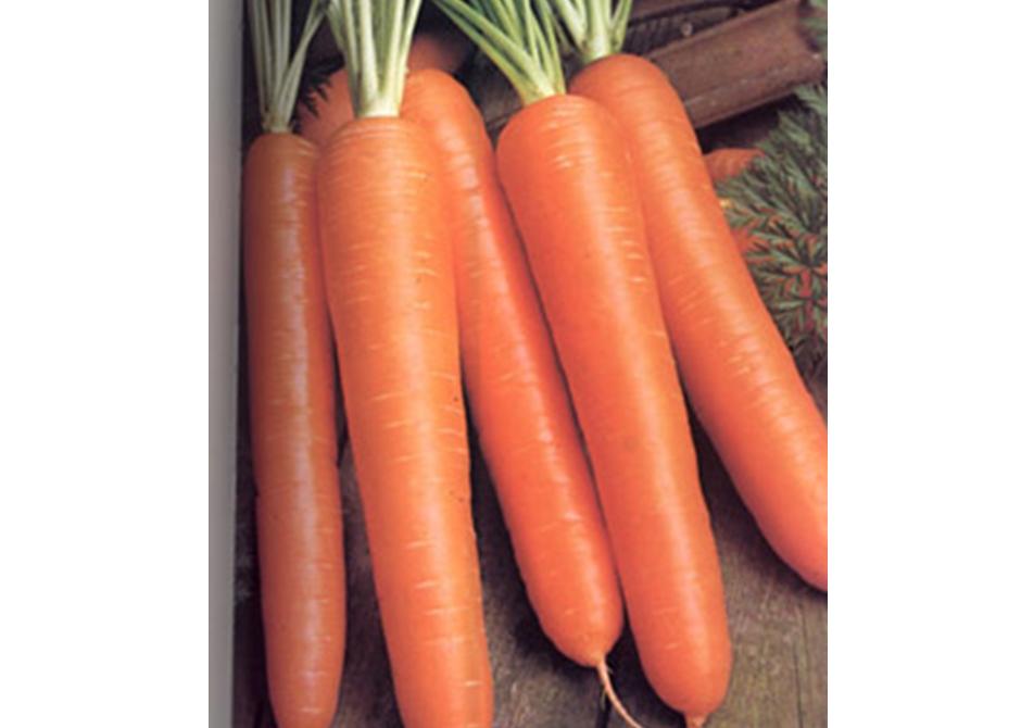 Bits De Inteligencia Verduras Hortalizas Y Legumbres Recurso