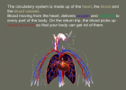 The circulatory system | Recurso educativo 40391
