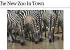 Website: The new zoo in town | Recurso educativo 43012