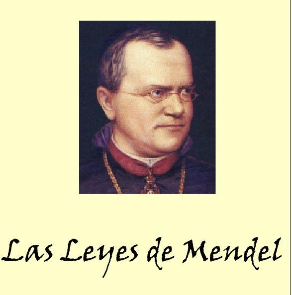 Leyes de Mendel | Recurso educativo 43694 - Tiching
