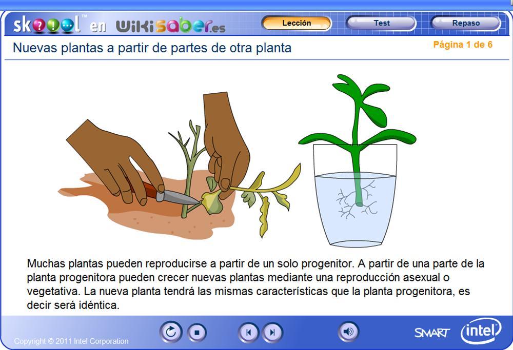 Reproduccion en plantas asexual o vegetativa
