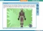 Joc educatiu: els ossos de l'esquelet humà | Recurso educativo 31632