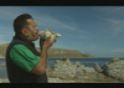 Whale watching and indigenous people of Kaikoura | Recurso educativo 70075