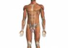 Descubre el cuerpo humano en 3D con Zygote Body | Recurso educativo 66848
