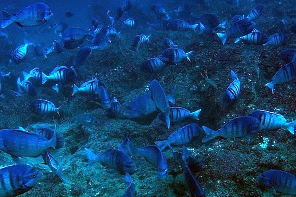 Peces funciones de reproducci n y relaci n recurso for La reproduccion de los peces