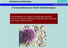 Animais invertebrados | Recurso educativo 686591