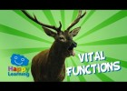 Vital Functions of Living Things | Recurso educativo 773690