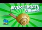 Invertebrate animals and their classification | Recurso educativo 773694