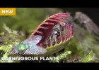 Carnivorous plants | Recurso educativo 773764
