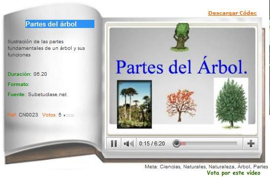 Partes del rbol recurso educativo 36236 tiching for Partes de un vivero forestal