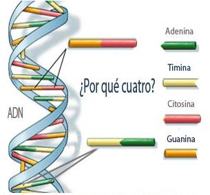 Adn y sus bases of dating