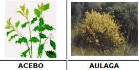 Arbustos y matorrales recurso educativo 46829 tiching - Lista nombre arbustos ...