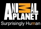 Animal Planet: Animal Planet: Animal Planet | Recurso educativo 96473